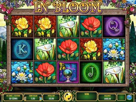 apercu In Bloom